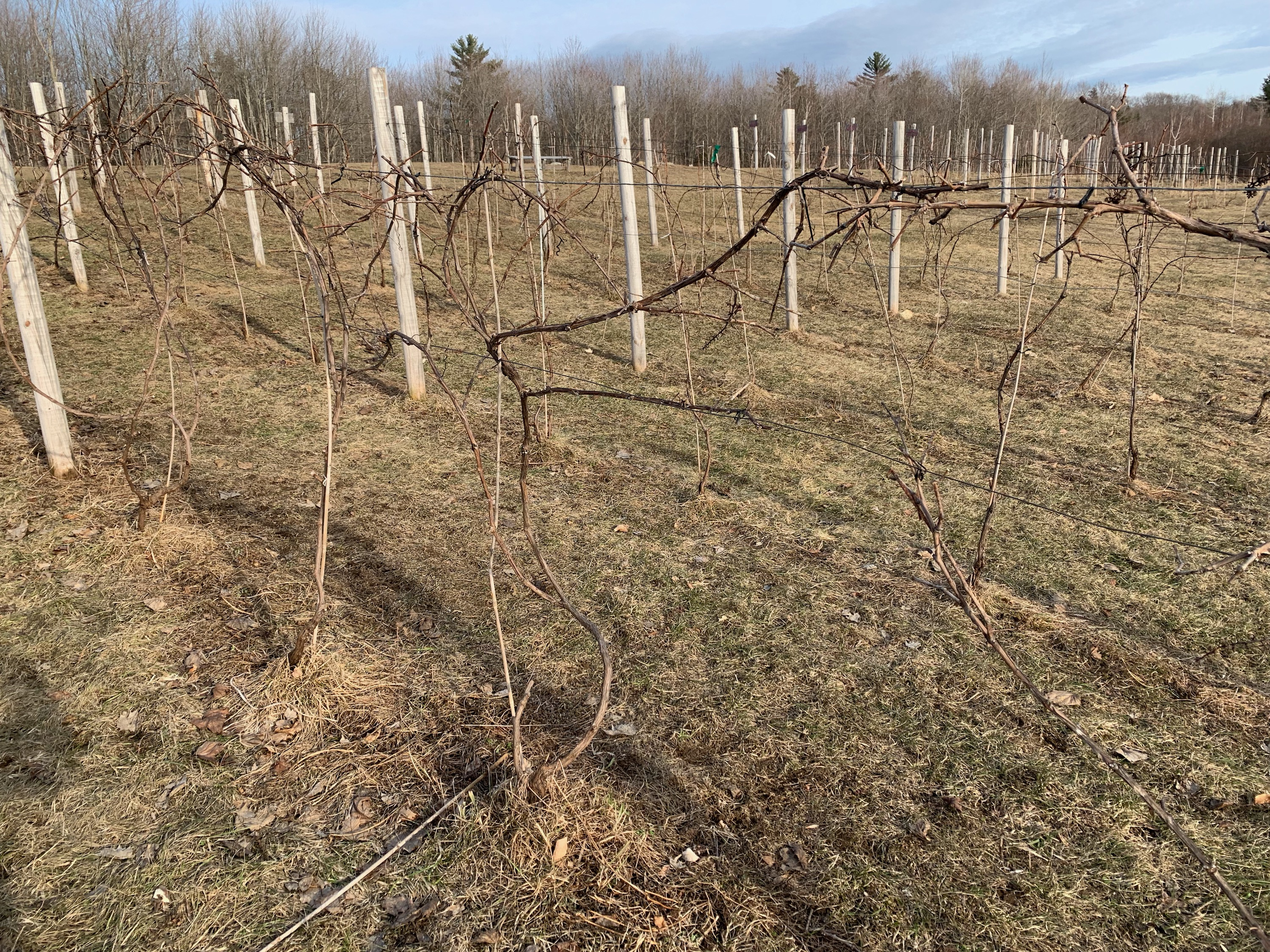Pruning the Vines, Part I